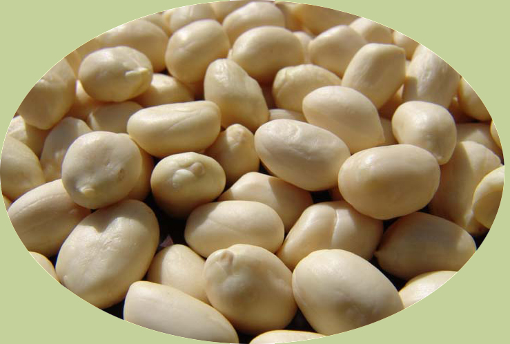 Blanched Peanut Machine Guide